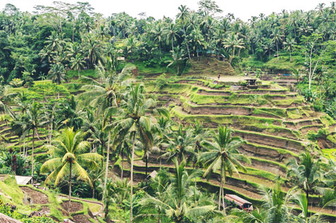 Canggu Villa Merah Bali Rice Fields Private Tours